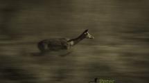 Dynamic blur-17