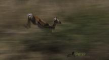 Dynamic blur-21