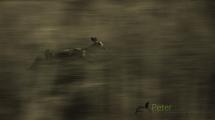 Dynamic blur-23