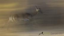 Dynamic blur-37