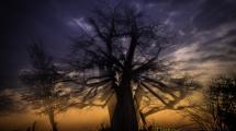 Dynamic blur-39