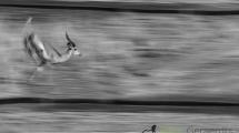 Dynamic blur-50