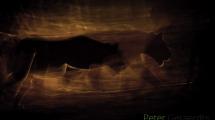 Dynamic blur-6