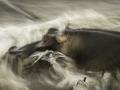 Dynamic blur-53