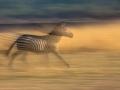 zebra_panning