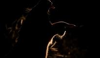 Lioness backlit