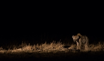 hyena night drive