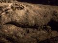 Croc Giant