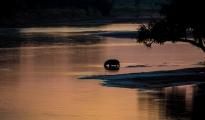 Luangwa hippo scenery