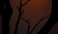 Scenery_egrets