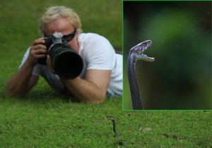 Venomous snakes in Zambia, Snake photography