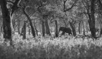 elephant in leadwood