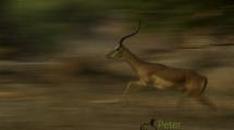 Dynamic blur-11