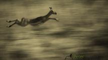 Dynamic blur-22