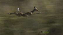 Dynamic blur-26