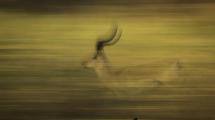 Dynamic blur-30