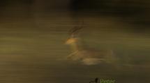 Dynamic blur-31