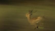 Dynamic blur-32