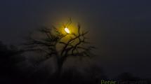 Dynamic blur-48