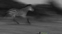 Dynamic blur-51