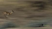 Dynamic blur-55