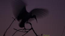 Dynamic blur-8