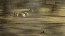 Dynamic blur-9