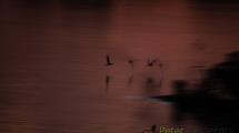 Dynamic blur-Skimmers