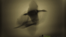 Dynamic blur_ Ducks