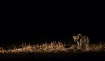 hyena night drive