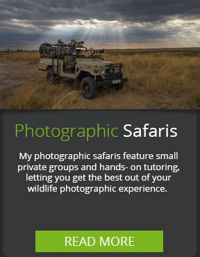 Photographic-Safaris